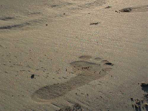Footprint on sandy beach